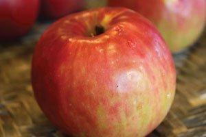 jonathan apple malus domestica catalog